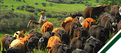 ranching-readmore-header-1.jpg
